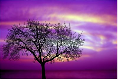 Picture Of Utopian Tree Silhouette